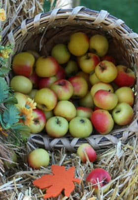 Bushel full of red and yellow apples